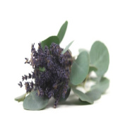 LAVENDER EUCALYPTUS FRAGRANCE OIL - 240ml - FOR CANDLE & SOAP MAKING BY VIRGINIA CANDLE SUPPLY - FREE S & H IN USA