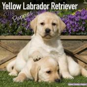 Yellow Labrador Retriever Puppies Calendar 2018