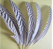 ZJONES 50pcs 15-22cm Natural Pheasant Feather Silver Pheasant Feather For Craft