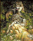 DIY Oil Painting for Adults Kids Paint By Number Kit Digital Oil Painting Wild & Free Wolves 41cm x 50cm