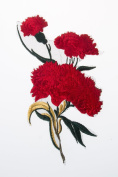 Red Canation Embroidered Craft Bouquet Flower Needlework Floral Decor Sew Iron