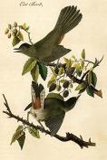 Cat Bird (20x30 Canvas Print)
