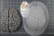 Human Brain (Mega) Plastic Mould Resin Mould, brain Mould, clay mould, soap mould, wax mould, anatomy mould, human mould, bath bomb mould